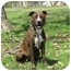 Photo 1 - Pit Bull Terrier/American Staffordshire Terrier Mix Dog for adoption in Chicago, Illinois - Brendy