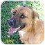 Photo 1 - German Shepherd Dog/Border Collie Mix Dog for adoption in Bellflower, California - Libby
