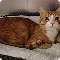 Adopt A Pet :: Milano - Fairfield, CT