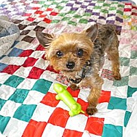 Adopt A Pet :: Spike - Orange County, CA