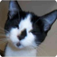 Adopt A Pet :: Tazz & Dax - Dallas, TX