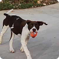 Adopt A Pet :: Etta - Wimberley, TX