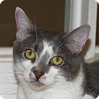 Adopt A Pet :: Monkey - North Branford, CT