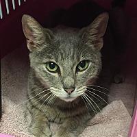 Adopt A Pet :: Trixy - Barrington, NJ