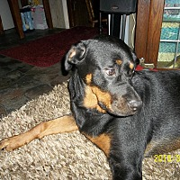 Rottweiler Dog for adoption in Elizabeth City, North Carolina - Bella and Tessa