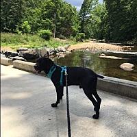 Adopt A Pet :: Rover - Alexandria, VA