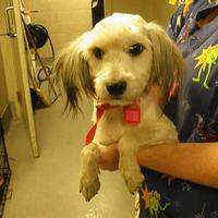 Adopt A Pet :: Delilah - Cleveland, OH