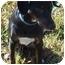 Photo 2 - Doberman Pinscher Mix Dog for adoption in Somerset, Pennsylvania - Tammy