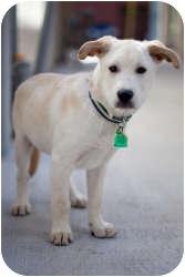 Shepherd (Unknown Type) Mix Dog for adoption in Houston, Texas - Winston