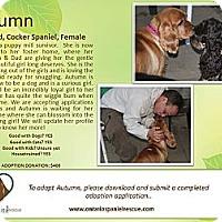 Adopt A Pet :: Autumn - Ottawa, ON