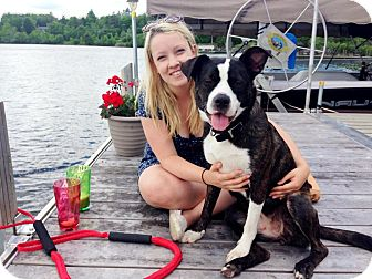 Boston Terrier/Pit Bull Terrier Mix Dog for adoption in Pierrefonds, Quebec - Lucy