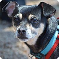 Adopt A Pet :: Machi - Wimberley, TX