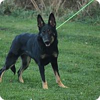 Adopt A Pet :: GUM - Tully, NY