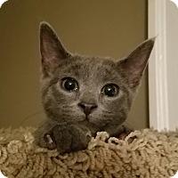 Adopt A Pet :: Heidi - Cleveland, OH
