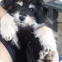 Adopt A Pet :: Sox - Santa Ana, CA