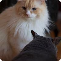 Adopt A Pet :: Boo - Simpsonville, SC
