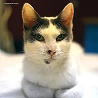Adopt A Pet :: Tornado - Tucson, AZ