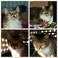 Adopt A Pet :: Laverne - Coshocton, OH