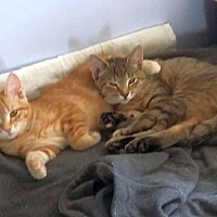 Adopt A Pet :: Sweet One & Spunky - Knoxville, TN