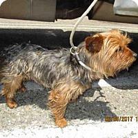 Adopt A Pet :: VAL - Lompoc, CA