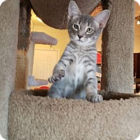 Adopt A Pet :: Boo - Charlotte, NC