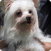 Maltese Mix Dog for adoption in Germantown, Maryland - Baby Doll