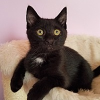 Adopt A Pet :: Luna - Carlisle, PA