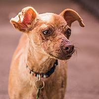Adopt A Pet :: Tommi - Santa Rosa, CA