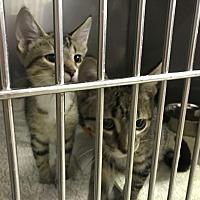 Adopt A Pet :: Malachi - Byron Center, MI