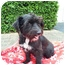 Photo 2 - Terrier (Unknown Type, Medium) Mix Dog for adoption in Coral Springs, Florida - Sally