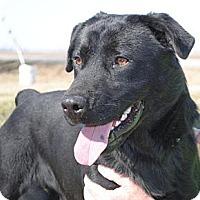 Adopt A Pet :: Tojo - Tunica, MS