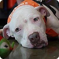 Adopt A Pet :: Buster - Baton Rouge, LA