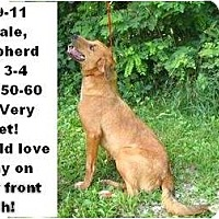 Adopt A Pet :: # 309-11 @ Animal Shelter - Zanesville, OH
