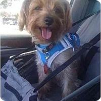Adopt A Pet :: Spencer - Ocala, FL