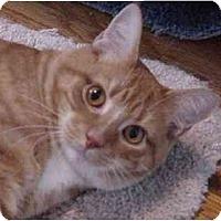 Adopt A Pet :: Romeo - Chesapeake, VA