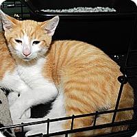 Adopt A Pet :: Ian - Farmingdale, NY