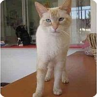 Adopt A Pet :: Dora - El Cajon, CA