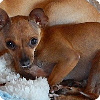 Adopt A Pet :: Juanita - Tucson, AZ
