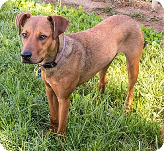 German Shepherd Dog Mix Dog for adoption in Fairfax, Virginia - Newman