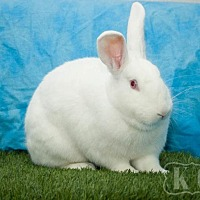 New Zealand for adoption in Pflugerville, Texas - Holly