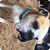 Adopt A Pet :: Sam - Turnersville, NJ
