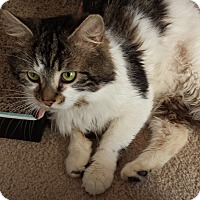 Adopt A Pet :: Patches(2) - Plainville, MA
