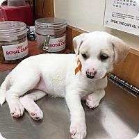 Adopt A Pet :: Balance - San Antonio, TX