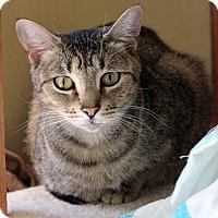 Adopt A Pet :: Jojo - Dalton, GA