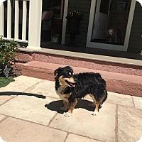 Adopt A Pet :: Gizmo-ADOPTION PENDING - Boulder, CO