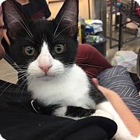 Adopt A Pet :: Cape - Hammond, LA