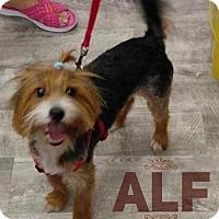 Adopt A Pet :: Alf - Great Bend, KS