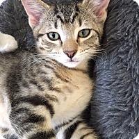 Adopt A Pet :: Jennings - St. Louis, MO