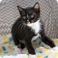 Adopt A Pet :: Tatiana - Montclair, CA