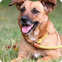 Adopt A Pet :: Ginger - Rockingham, NH